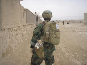 Nowzad official
