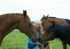 chevaux0012